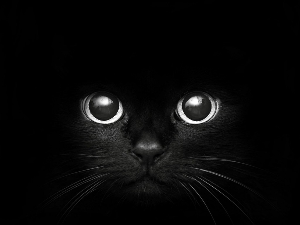 10689b-black-cat-top-resolution